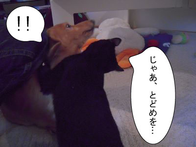 gazou-45451515555.jpg
