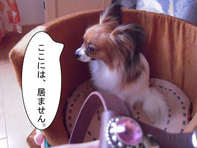 gazou-496555555484.jpg