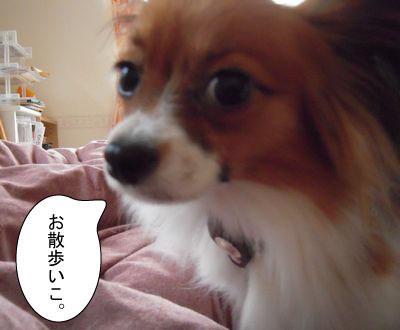gazou-5043647.jpg