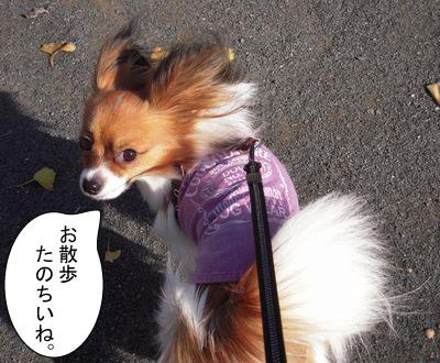 gazou-508365489.jpg