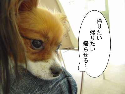 gazou-569ftyjnt.jpg