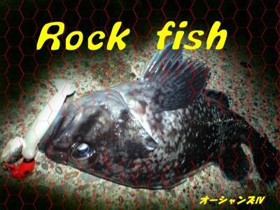 rock fish 2