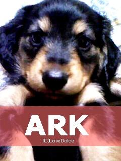 20080107-ark.jpg
