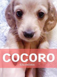 20080107-cocoro.jpg