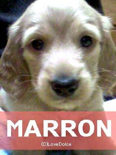 20080107-marron.jpg