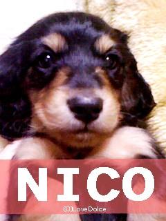 20080107-nico.jpg