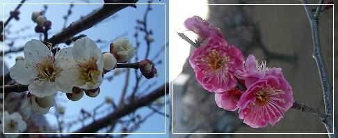 20080224_2.jpg