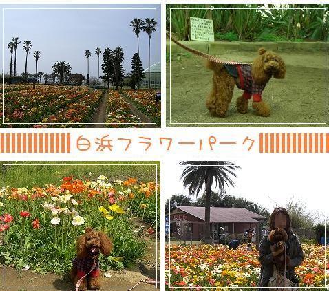 20080323_5.jpg