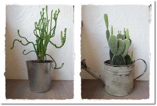 2011・9・11・成長した観葉植物