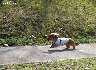 公園散歩②