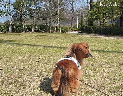 公園散歩③