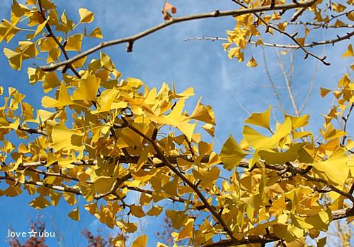 秋の公園④