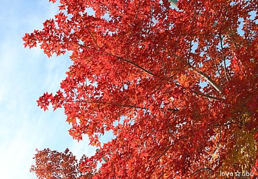 秋の公園①