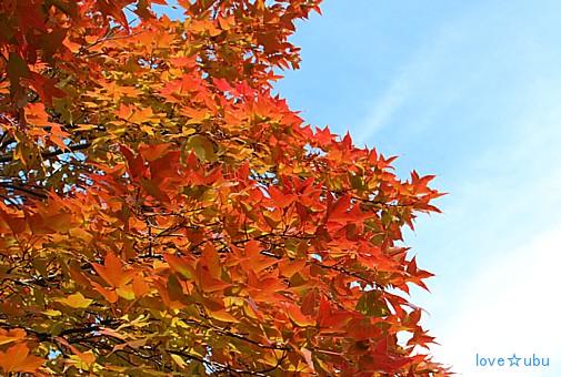 秋の公園③