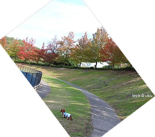 秋の公園②