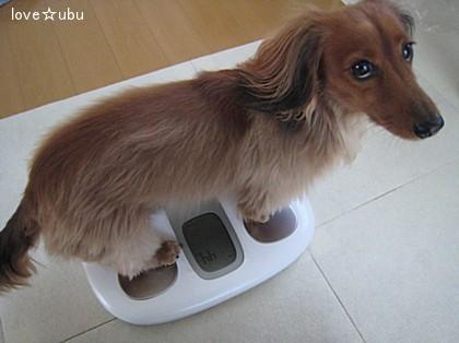 4.4kg!!