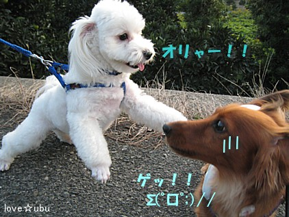 散歩 with ミルク④