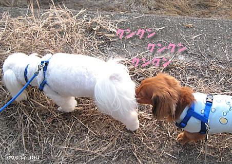 散歩 with ミルク②