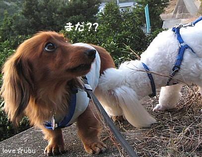 散歩 with ミルク③