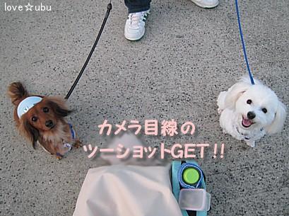 散歩 with ミルク⑤