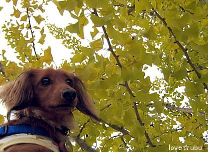 秋ですね~。