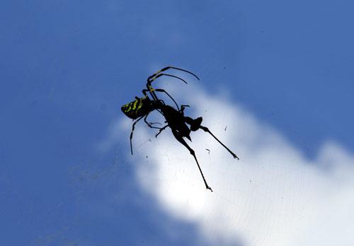 spidersky.jpg