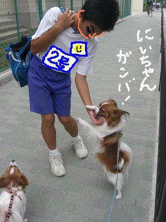 chichino2.jpg