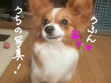 pon3.jpg