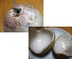 coconutopen.jpg