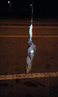 イカ吊り? 釣り。