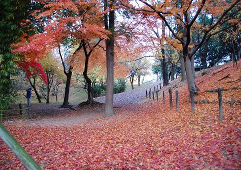 紅葉20081116-11