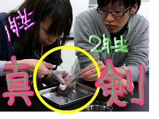 snap_ma2blog2_2009122112412.jpg