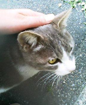 すりすり、あまあま、かわいい年より猫さん