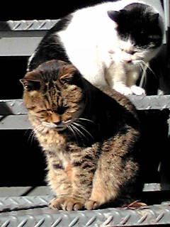 日だまり猫
