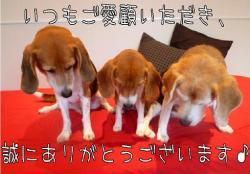 1蜻ィ蟷エ_convert_20111231134540