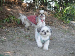 浜名湖犬1