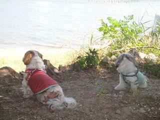 浜名湖犬2