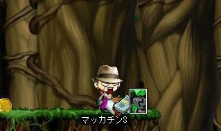 Maple6792a.jpg
