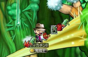 Maple9519a.jpg