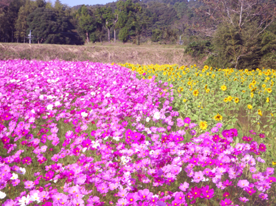 0-kosumo4x.jpg