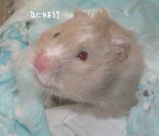 200604121989.jpg