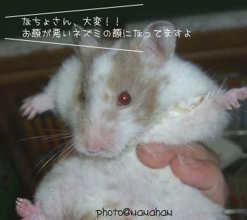 悪いネズミの顔です。