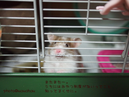 P9020110.jpg