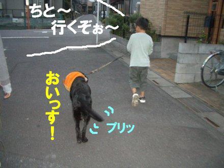 CIMG2533_8.jpg