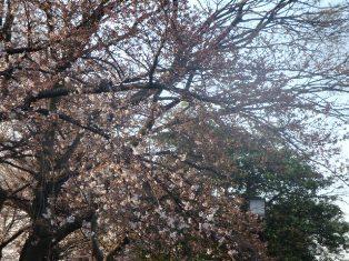 枝の先から咲いてます
