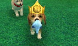 dogs0471.jpg