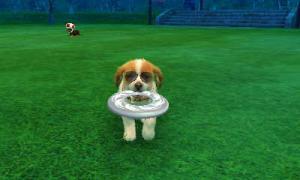 dogs0480.jpg
