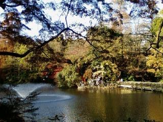 井の頭公園2