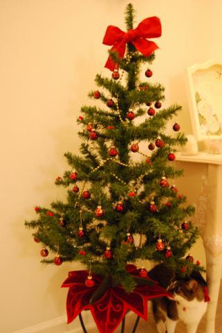 クリスマスツリー①2008