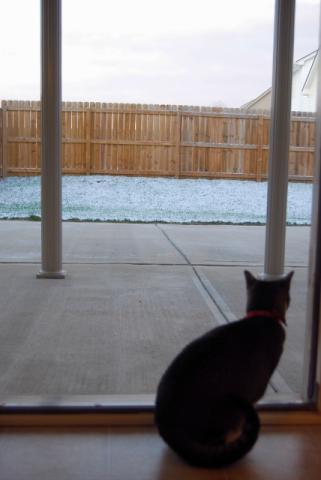 11月の朝 雪